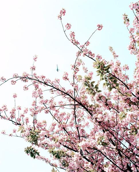 BT Baumblüte Nr. 42-24938157