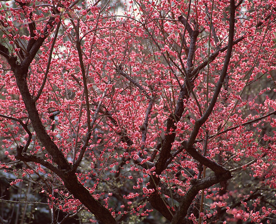 BT Baumblüte Nr. 42-26087850
