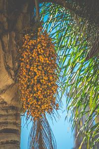 Alcazar Garden   Balboa Park   San Diego, California   The 2015 Sony Alpha Experience