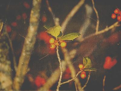 :: autumn's jewels ::