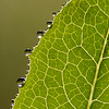 Alcoy, Dew on a leaf