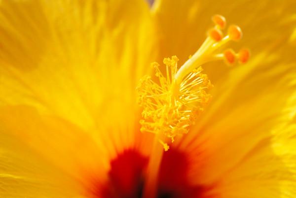 BT Flowers Orange No. 42-33771778
