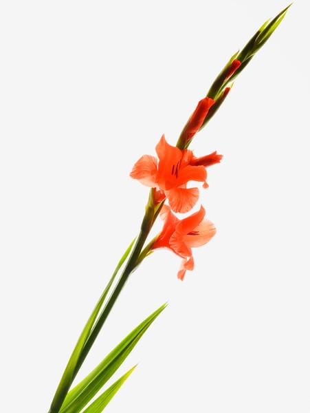 BT Flowers Orange No. 42-19756501