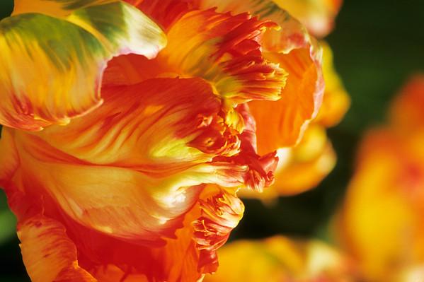 BT Flowers Orange No. 42-28855294