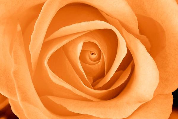 BT Flowers Orange No. 42-23965262