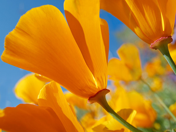 BT Flowers Orange No. 176979