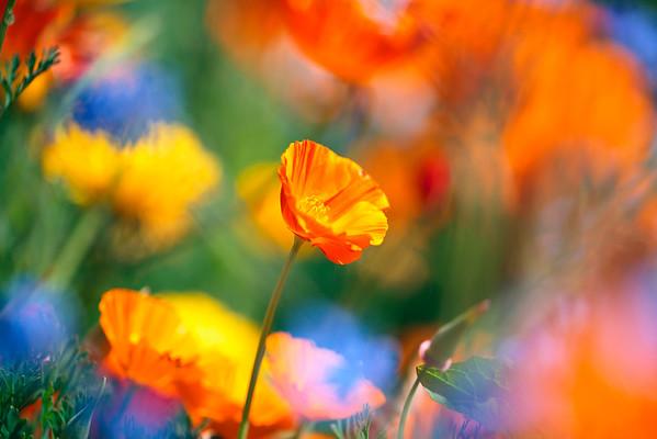 BT Flowers Orange No. 42-42816047