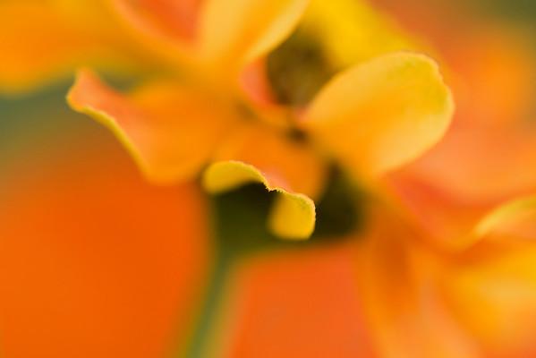 BT Flowers Orange No. 42-22865503