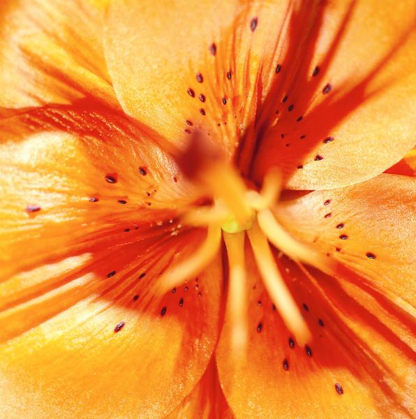 BT Flowers Orange No. 42-27034406