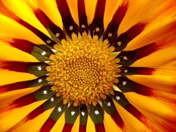 BT Flowers Orange No. 42-29354554