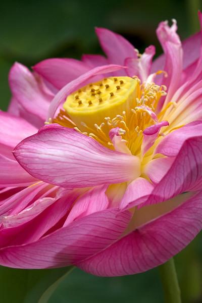 BT Flowers Pink No.