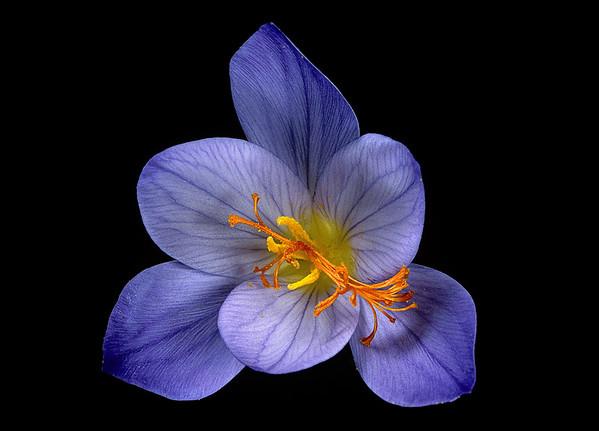 BT Flowers on Black Nr.: 42-75418040