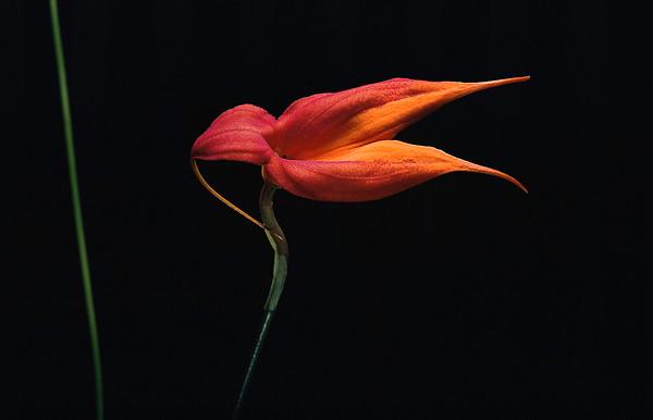 BT Flowers on Black Nr.: 42-80842932