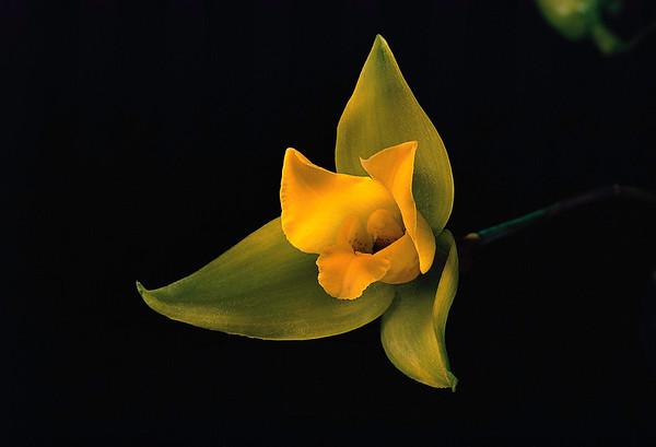 BT Flowers on Black Nr.: 42-80842066