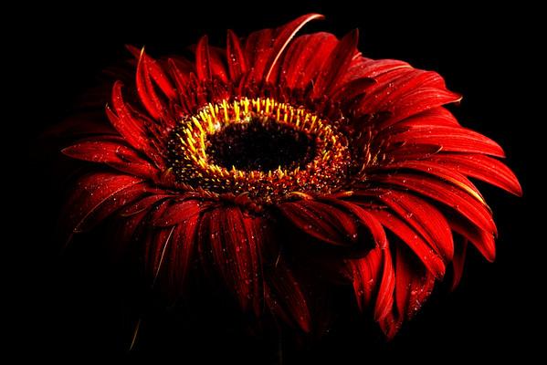 BT Flowers on Black Nr.: 42-59968425