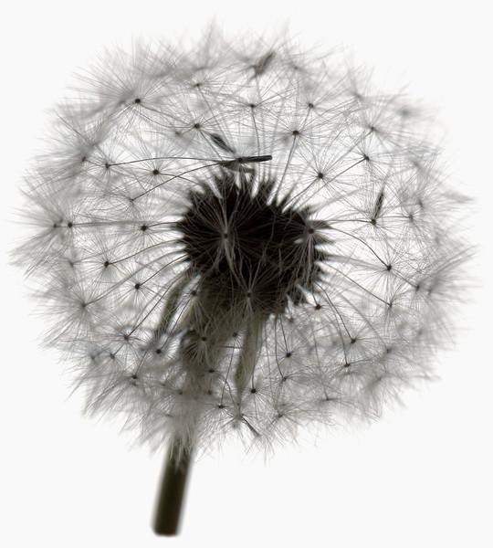 BT Flower Studie Nr.: 42-21778855