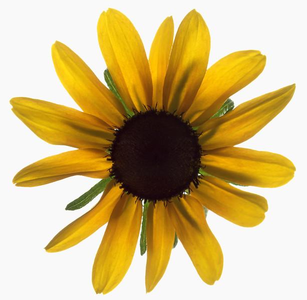 BT Flower Studie Nr.: 42-21778861