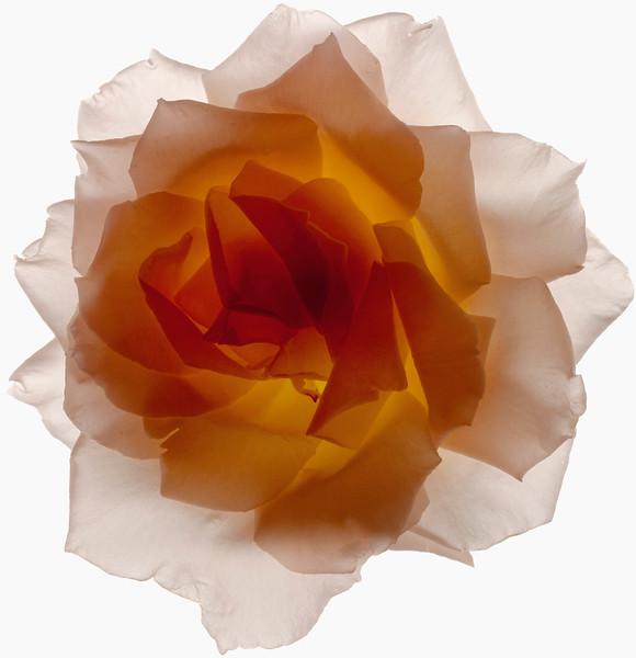 BT Flower Studie Nr.: 42-21778863