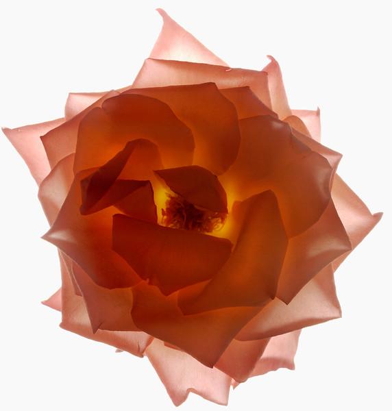 BT Flower Studie Nr.: 42-21778865