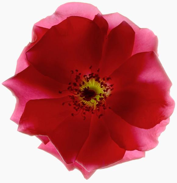 BT Flower Studie Nr.: 42-21778860