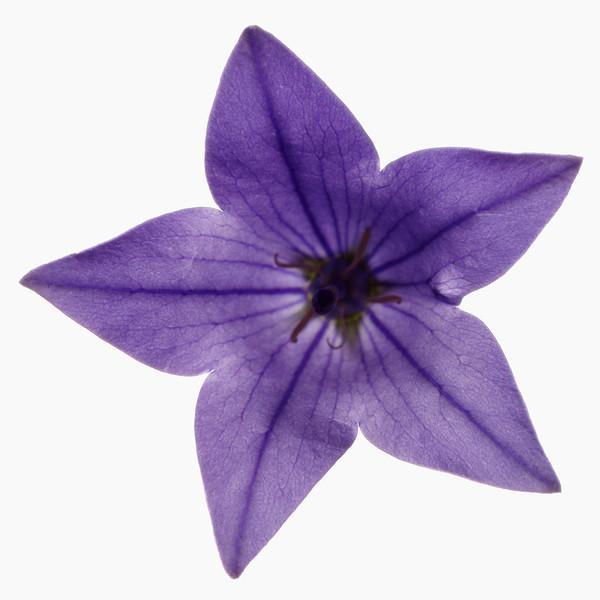 BT Flower Studie Nr.: 42-21778867