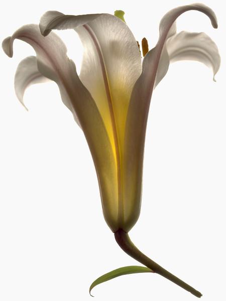 BT Flower Studie Nr.: 42-21778877