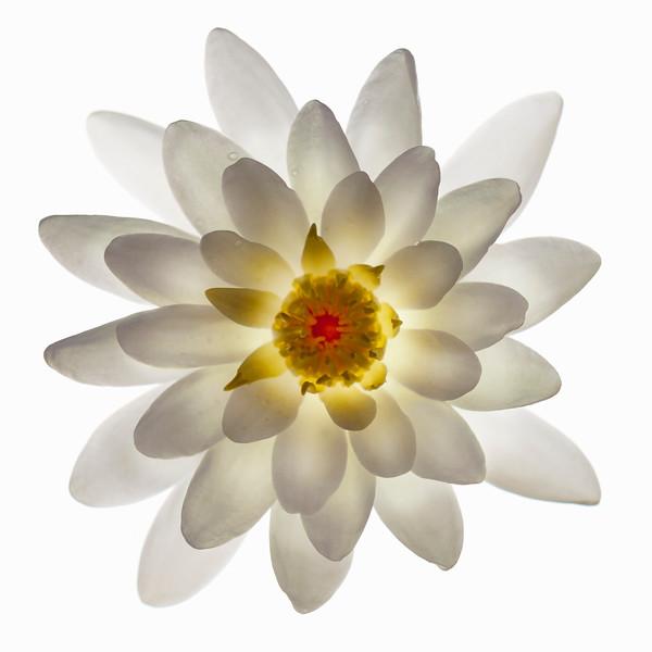BT Flower Studie Nr.: 42-21778901
