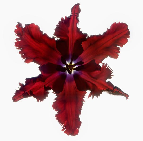 BT Flower Studie Nr.: 42-21778873