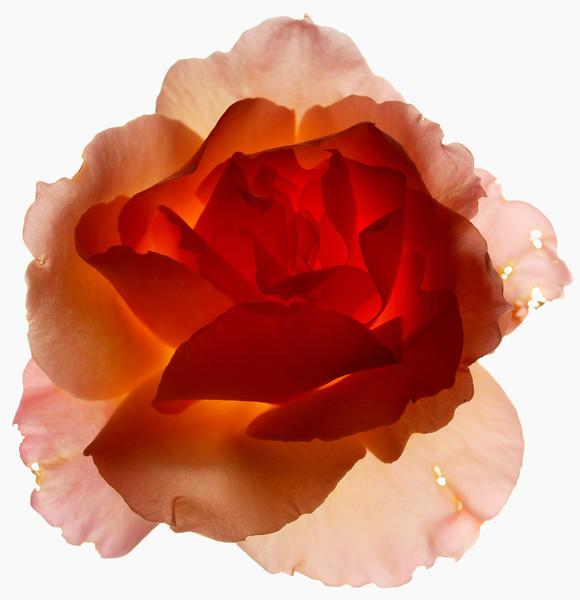 BT Flower Studie Nr.: 42-21778876