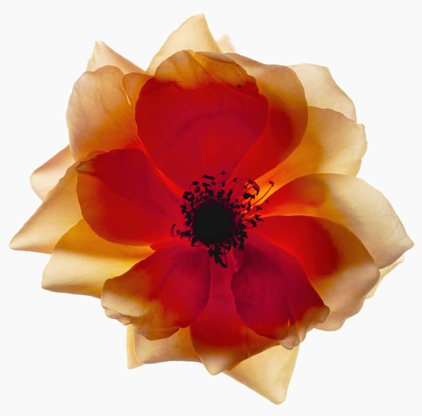 BT Flower Studie Nr.: 42-21778875