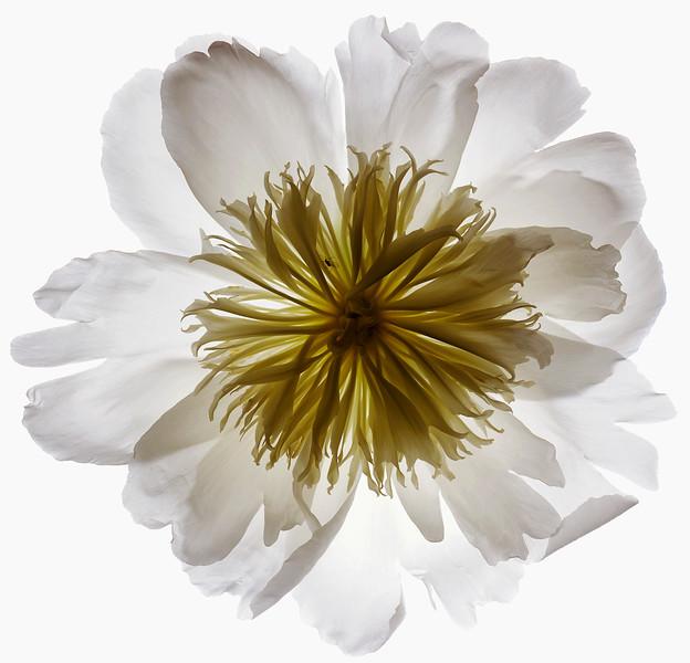 BT Flower Studie Nr.: 42-21778862