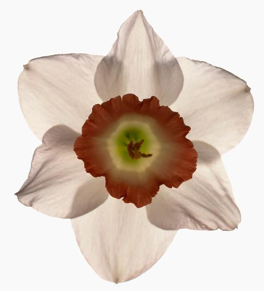 BT Flower Studie Nr.: 42-21778880
