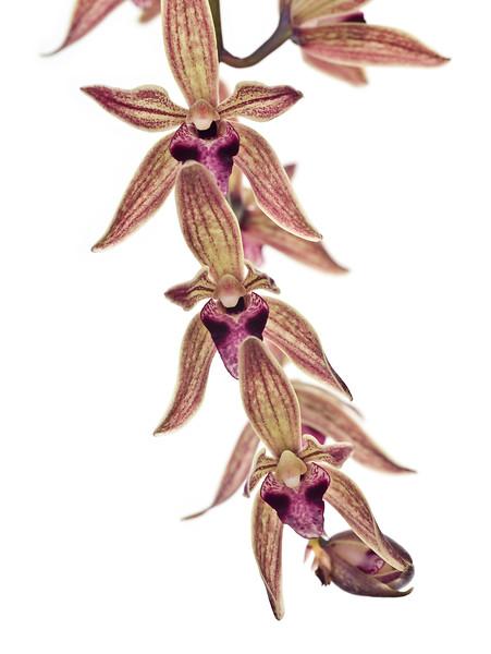 BT Flower Studie II Nr.: 42-67246203