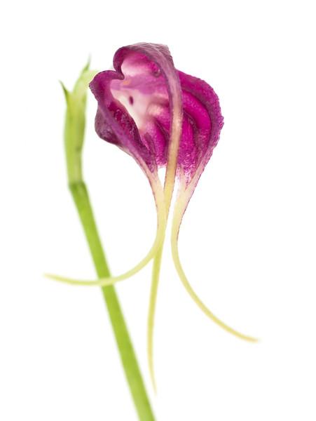 BT Flower Studie II Nr.: 42-67246014