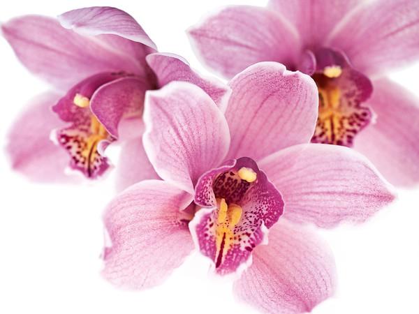 BT Flower Studie II Nr.: 42-67245947