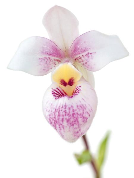 BT Flower Studie II Nr.: 42-67246079