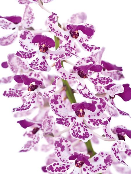 BT Flower Studie II Nr.: 42-67246071