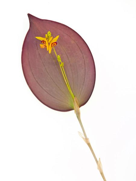 BT Flower Studie II Nr.: 42-67246191