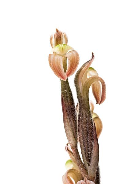 BT Flower Studie II Nr.: 42-67246074