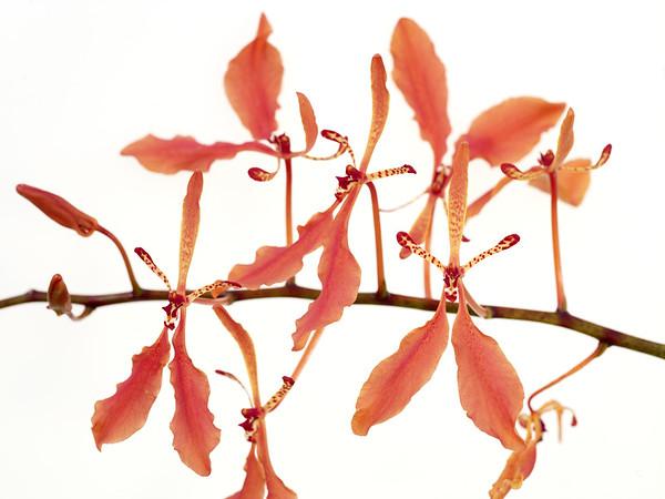 BT Flower Studie II Nr.: 42-67245932
