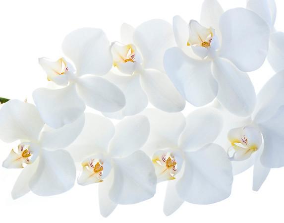 BT Flower Studie II Nr.: 42-67245884