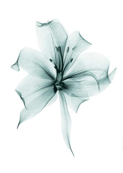 BT Flower Studie II Nr.: 42-29596225