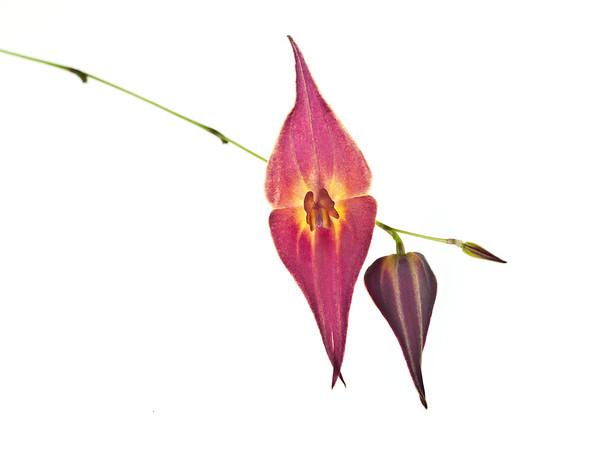 BT Flower Studie II Nr.: 42-67246187