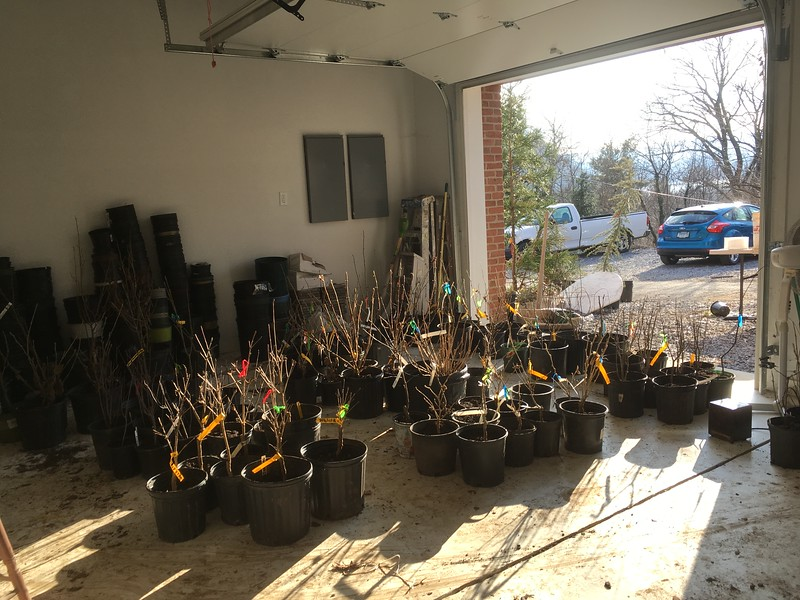 Some of the potting party handiwork in our garage