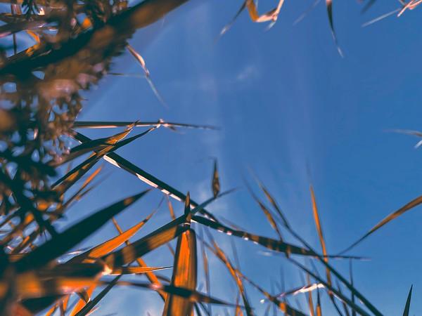 BT Bunte Wiesen Nr. Sky Grass