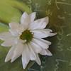 2006 Daisy Experiments