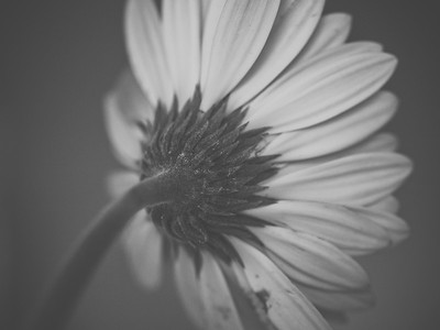 Daisies: A study | 2010