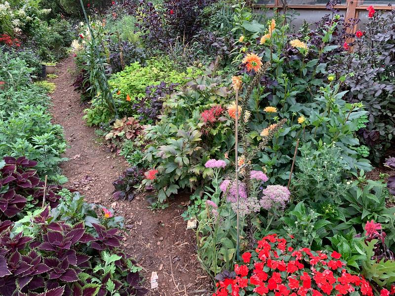 Diebold,  coleus, impatiens, dahlias, red Lycoris radiata