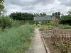 Veg garden, grape arbor, MofSV, asaragus on L