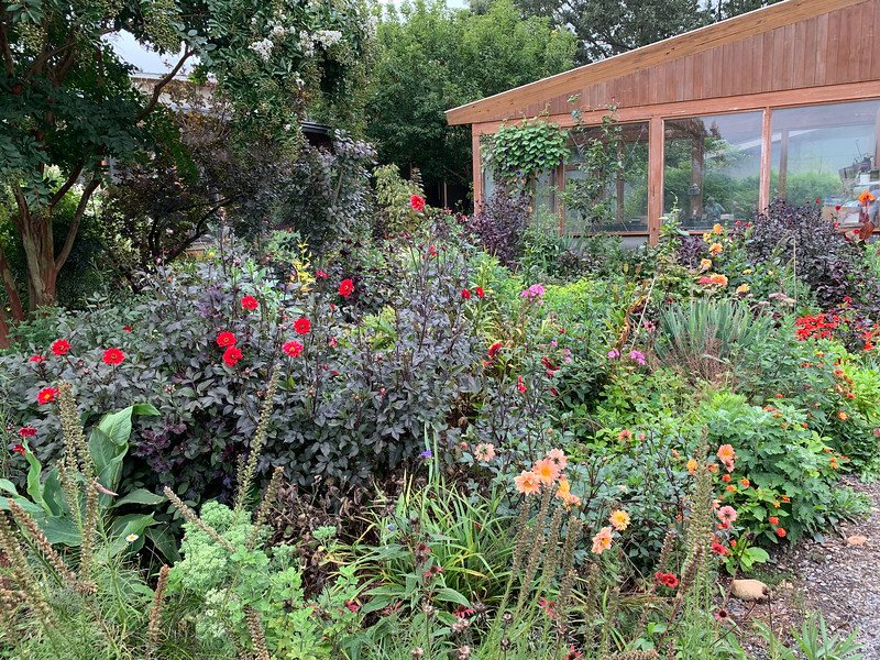 """DIebolds, """"house"""" garden from driveway edge, looking towds g'house"""